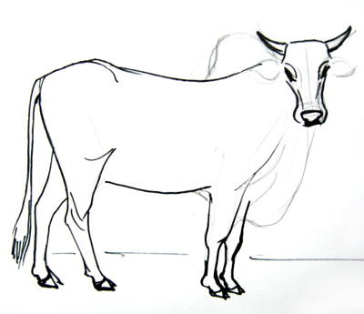 Zebu step by step drawing