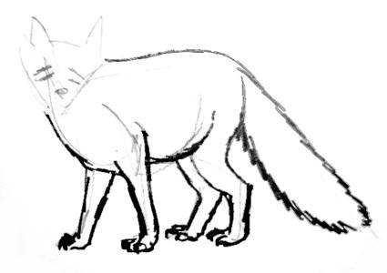 Red fox drawing step by step