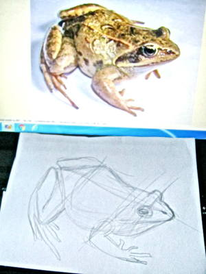 How to learn to draw a frog