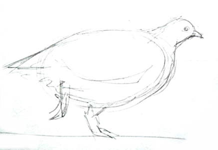 Arctic partridge pencil sketch