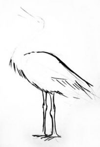 Stork phased drwing