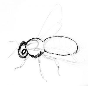 Honey Bee drawing step by step