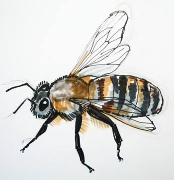 Bee drawing 13