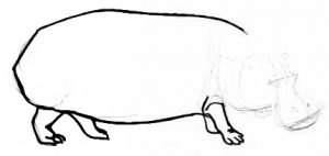 Hippo drawing step by step