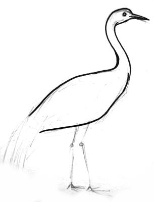 Crane drawing step by step
