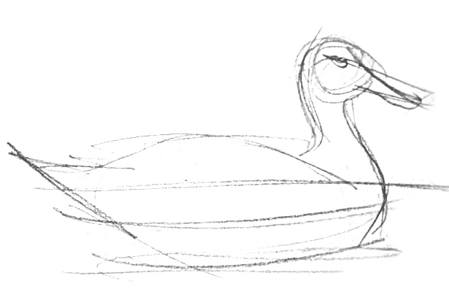 Realistic duck drawing