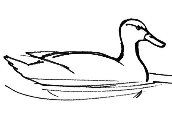 Duck drawing step by step