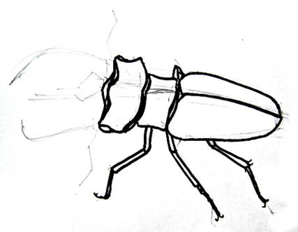 Phased stag beetle drawing