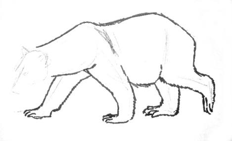 White bear drawing