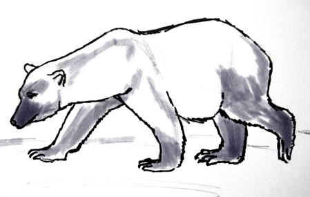 White polar bear drawing