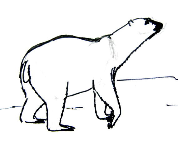White Polar bear drawing for kids