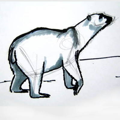 Polar Bear drawing 13