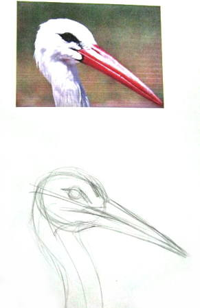 How to draw a stork head