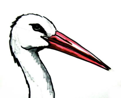 Stork head colored drawing
