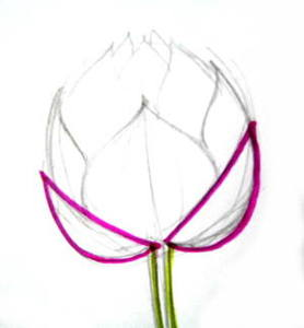 Lotus Bud structure