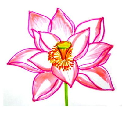 Lotus Flower colored drawing