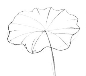 How-to-draw-a-Lotus-leaf-0451