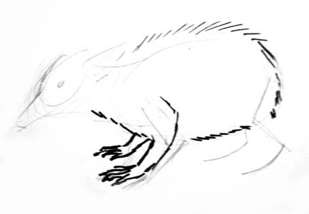 Tenrec drawing step by step