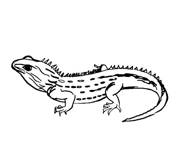 Tuatara line drawing
