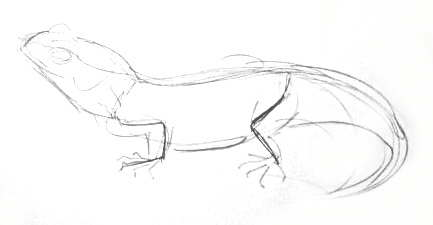 Tuatara pencil sketch