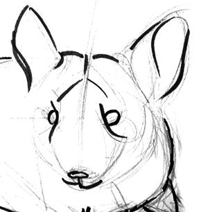 Chinchilla head drawing