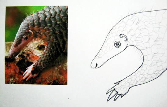 Pangolin face drawing