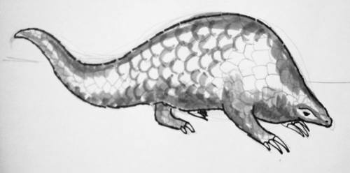 Pangolin drawing  13