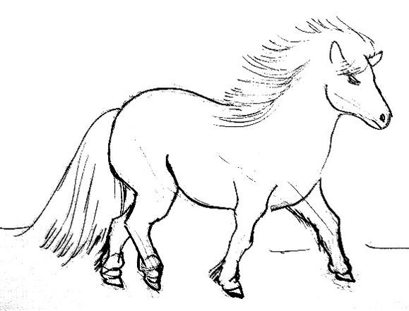 Pony drawing