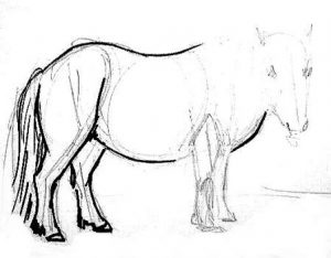 Pony drawing -step 3