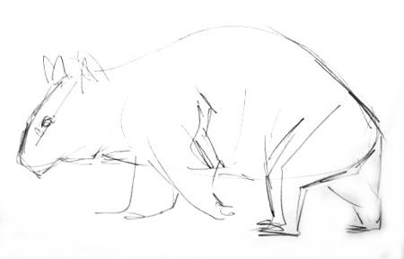 Wombat outline