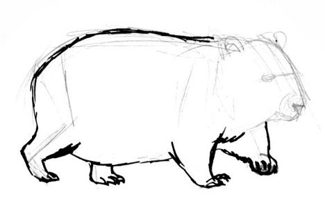 Wombat paws drawing