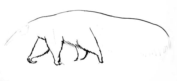 Anteater phased drawing