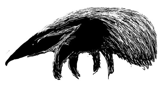 Anteater drawing -2
