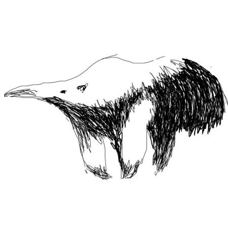 Anteater drawings and pictures