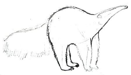 Anteater drawing step-by step tutorial