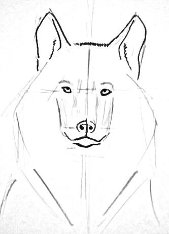 Wolf full face drawing