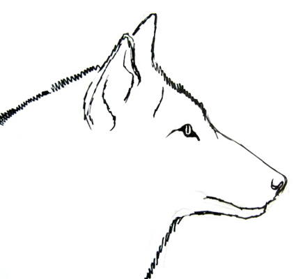 Wolf profile drawing
