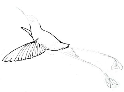 Hummingbird drawing tutorial