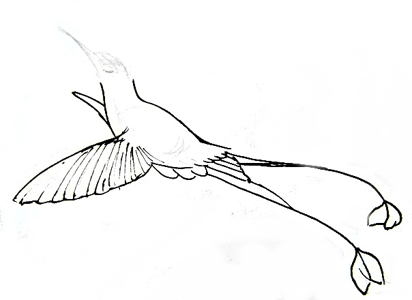 Hummingbird step by step-3