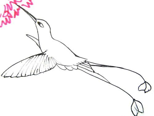 Hummingbird coloring picture
