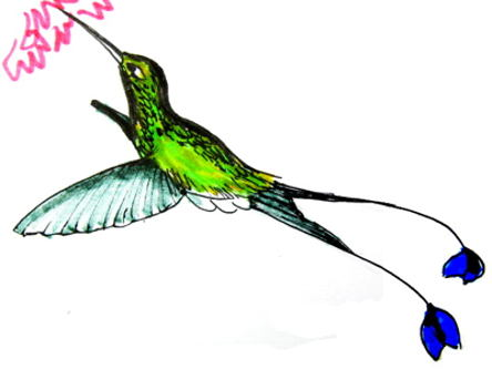 Hummingbird  colored drawing