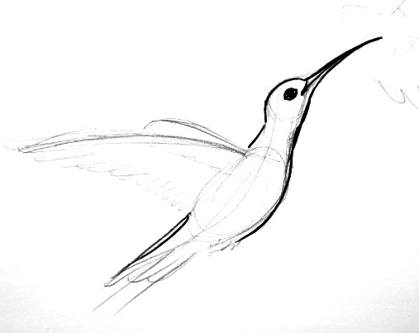 Hummingbird drawing step by step