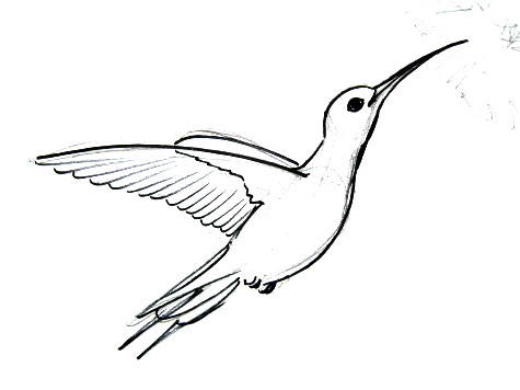 Hummingbird drawing
