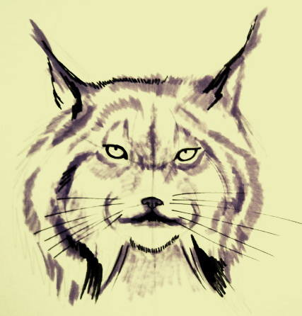 Lynx face drawing