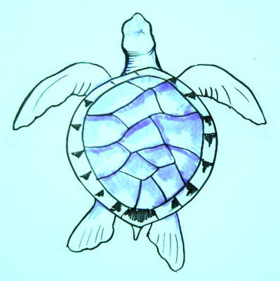 Sea turtle drawing 13