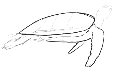 Sea turtle flippers drawing