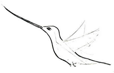 Hummingbird drawing step-by-step