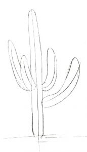 Cactus step by step drawing
