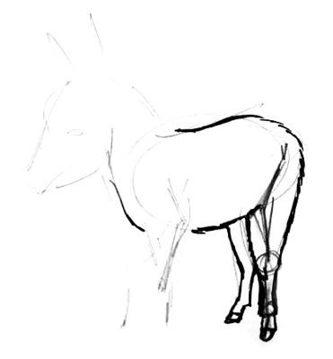 Donkey legs drawing