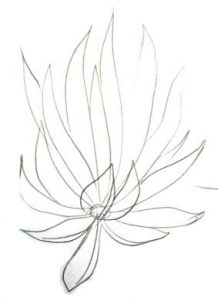 Agave drawing lesson 3